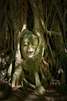 The famous Buddha Head at Wat Mahathat Temple, Thailand