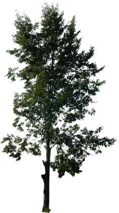 tree 14 png by gd08.deviantart.com on @DeviantArt