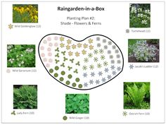 Raingarden In A Box Designs Prior Lake Spring Watershed District