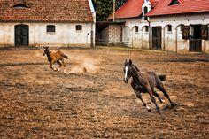 """500px / """"Racot mansion - stables"""" by Jacek Gadomski"""