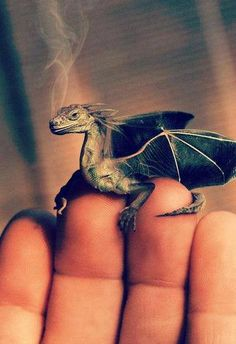 I'd buy a little baby dragon just for you ❤️