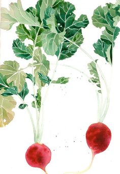 2 red radishes - Gabby Malpas