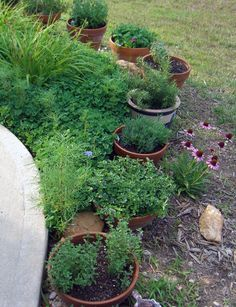 Another herb container garden idea.