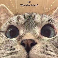 Hi! Whatcha doing? http://cheezburger.com/9039066880