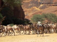 Toubou Herders | by D-Stanley
