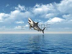 акула: Большая белая акула Прыжки