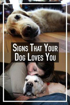 puppytrainingtips #puppytraining101 #huskygram #huskyheaven #huskysmile #huskypuppies #huskylovers #huskystagram #huskyloversunite #huskyofinstagram #huskylovingclub #huskyx #huskyproblems #huskyphotos This husky is so beautiful ❣️❤️ .. .. Cute Funny Animals, Cute Baby Animals, Animals And Pets, Wild Animals, Cute Puppies, Cute Dogs, Dogs And Puppies, Doggies, I Love Dogs