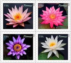 Water Lilies Forever stamps