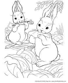 farm animal coloring page wild bunny rabbits - Farm Animal Coloring Pages Sheets