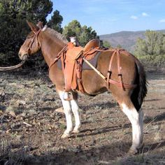 Cliff Wade Saddle on Mule Bars Mules lack withers, so britchin is needed to keep the saddle from sliding forward or sideways. The breast collar keeps it from sliding backward. Horse Stalls, Horse Barns, Horse Horse, Breyer Horses, Draft Mule, Mules Animal, Horse Saddles, Western Saddles, Horse Halters