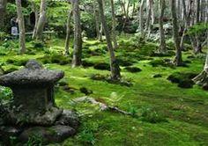 Moss Garden - Bing Images