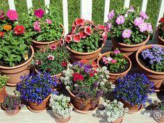 207 Best Outdoor Flower Pots Images Flower Pots Container