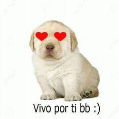 Love Memes, Best Memes, Response Memes, Heart Meme, Spanish Memes, Quality Memes, Wholesome Memes, Reaction Pictures, Dog Love