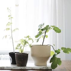 Eilen näpyttelin blogiin juttua näistä sisäkasveista, tänään hypättiin puolestaan ulos. Ihana vihreä 💚 #myhome #greenhome #plants #skagerak #onthetable