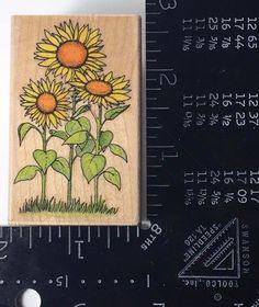 SUNFLOWERS All Night Media 473F Rubber Stamp Flower Plant 748  #AllNightMedia