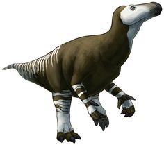 """alphynix: H is for Hippodraco Hippodraco scutodens was an iguanodontian dinosaur from the Lower Cretaceous of Utah, USA, about 124 million years ago. It was on the smaller side for iguanodonts, being """"just"""" 4.5m long (15ft), roughly the size of a modern rhinoceros. Its genus name translates to """"horse dragon"""", based on its long vaguely horse-like skull. Iguanodonts, including the eponymous Iguanodon, were one of the first groups of dinosaurs to be found and described in the early 1800s. Some…"""