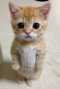 Most Adorable Kitten