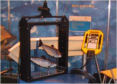 VAKI's products are used with fish from fry to harvest size of all species. What all VAKI's products have in common is that they give the user accurate information about the production or migration pattern and so facilitate planning and decision-making.