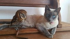 Kitty and owl best buds then and now
