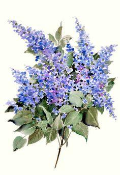 "Joy Waldman WATERCOLOR. ""Lilacs"""