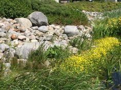 Stones, Plants, Rocks, Stone, Flora, Plant, Planting