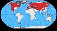 Corvus corax map.jpg