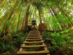 Pacific Rim National Park Reserve | Pacific Rim National Park Reserve, Canada