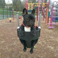 'Charlee', French Bulldog Puppy