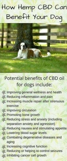 Hempworx Just Came Out With Some New Products For Your PETS!! Yes, your pets can benefit from CBD Oil as well. See chart below for what it can do to better improve your furbabies health. CBD Oil th…