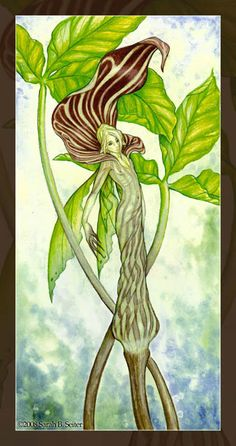 Jack-in-the-Pulpit by *MisticUnicorn on deviantART
