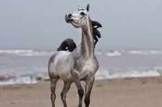 Salome Arabian Resin by Brigitte Eberl and painted by Josine Vingerling