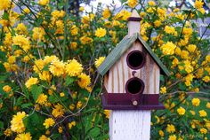 Bird House Among Spring Flowers by doubledcop, via Flickr