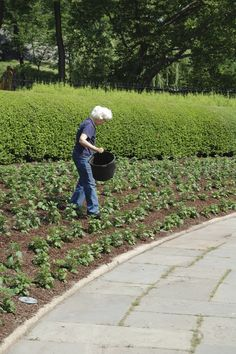"""""""Lynden Miller & the volunteers plant the Conservatory Garden's North Garden borders with thousands of Korean Chrysanthemums."""""""