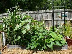 vegetable garden tips (1)_mini