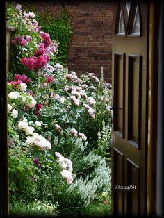 'A Big Hobby - My Small City Garden' Garden Photo