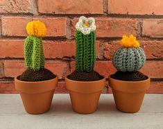 Small cactus crochet pattern | Etsy