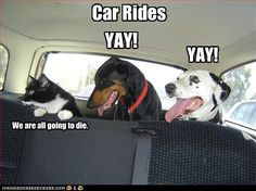 Yup this is how it is everytime we get our dog and two cats in the car :)