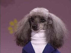 This businesswoman. Always dress for success. | 29 Dogs You Won't Believe Actually Exist