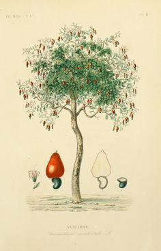 [1870-1872] - Flore médicale usuelle et industrielle du XIXe siècle, - Biodiversity Heritage Library