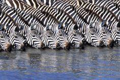 Upeat safarikuvat Afrikasta -taustakuvat