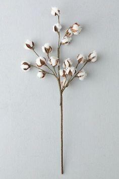 Fleurs de coton*: