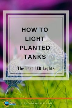 Lighting aquarium is aesthetic and necessity if you have live plants in your fish tank. Led lights for planted tanks are a good choice. via @fishtankworld0195
