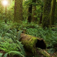 Two Seconds of Comfort Kills Old Growth Forests - There's nothing wrong with 100% recycled toilet paper :)