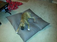 DIY dog bed made from old pillows and extra fabric I had lying around. My boxer dog loves it! Love my Jasmine baby! Got the idea from a pin as I scrolled. Don't have the source :(  -RH