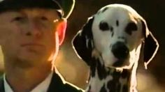 never laugh at people, you won't know one day they will stand higher than you. Budweiser Super Bowl XXXIII ad   Clydesdales Separated at Birth 1999 #superbowl #cute #dalmation
