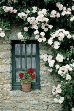 geraniums at the window and a rambling rose ,just beautiful.red geraniums at the window and a rambling rose ,just beautiful. Beautiful Gardens, Beautiful Flowers, Beautiful Pictures, Climbing Roses, Jolie Photo, Window Boxes, Window Sill, Dream Garden, Windows And Doors