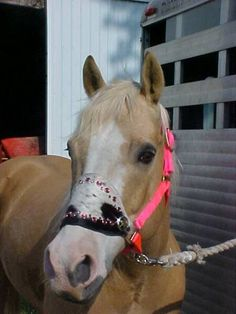 Black and White Speckled Bronc Halter with Pink Crystals and Ranger Star Conchos