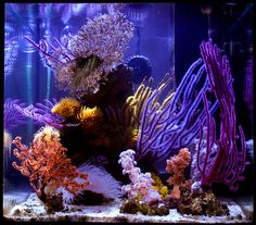 If you've been thinking about getting a new hobby, sprucing up your apartment or even having some sort of low maintenance pet; consider starting a salt water reef tank. Check out Nano-Reef.com for some great info and how-to guides from fellow hobbyist. It's a great site to get you started!