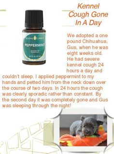 Can You Give A Dog Peppermint Oil