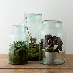 Love these vintage Hungarian jars- perfect for terrariums.